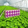 Nursery Apollo 12  LED Grow Light  Manufacturer