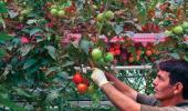 LED technology on its way to Canadian greenhouses